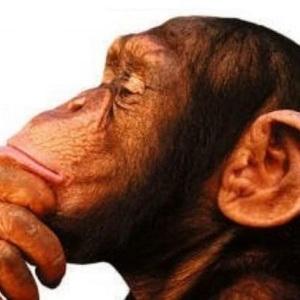 Mono pensador